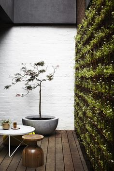 "This may be an ""interior"" courtyard, but the wall of plants certainly makes it seem fresh and outdoorsy! 
