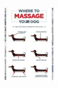 Dog Health Tips, Pet Health, Mental Health, Health Care, Dog Care Tips, Pet Care, Pet Tips, Cesar Millan, Secret Life Of Pets