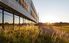 01-HighGrasses-ph-Frank-Schoepgens « Landscape Architecture Works   Landezine