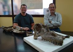 Sarmientosaurus weighed as much as two elephants but had a brain the size of a lime
