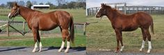 Pure Symmetry(2003)(Filly) Storm Cat- Serena's Song By Rahy. 3x4 To Northern Dancer, 5x5 To Nasrullah & Native Dancer. 6 Starts 2 Thirds. $14,265. Pure Symmetry On Left Above With Her 2014 Colt By Kitten's Joy On Right.