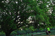 """Olhares do avesso: O tenor do ônibus.Bom dia. Good day. Good morning.  Crônica. Chronicle. """"...as pessoas permaneciam caladas com os olhos brilhando e um sorriso de esperança nos lábios."""" """"...People stay silent with eyes shining and a hopeful smile"""" http://olharesdoavesso.blogspot.com.br/2015/11/o-tenor-do-onibus.html?m=0 #bomdia #goodday #goodmorning #cronica #chronicle #sampa #sãopaulo #paulistanos #bus #onibus #city #tenor #cantor #sunday #domingo #musica #music #monday #segunda #holiday"""