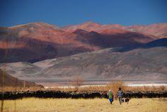 SALTA (ARGENTINA) No meio de um vale seco no noroeste da Argentina, Salta é uma região que reúne lindos cenários naturais, raízes indígenas e ótima gastronomia. http://www.handmadevacations.com.br/2016/12/19/para-onde-viajar-em-2017-salta-argentina/