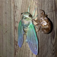 Cool Bugs, Beautiful Bugs, Gremlins, Homestuck, Nymph, Sea Creatures, Moth, Weird, Cute Animals