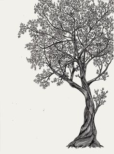 Tree of life art tree of life by arganthone on deviantart tr Illustration Blume, Botanical Illustration, Tree Drawings Pencil, Tree Outline, Tree Sketches, Tree Art, Tree Of Life Artwork, Life Drawing, Life Tattoos