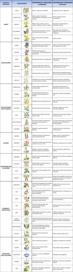 Las Flores de Bach son una terapia natural que ayudan a dar un equilibrio a la parte emocional y mental del hombre.