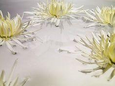 Flowers rest upon liquid. 42-47474962, Fotochannels