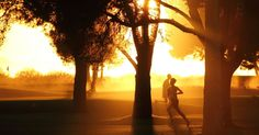 Silhouettes Of Trees Photo Contest