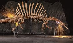 Fossils from Morocco gave an international team of paleontologists the opportunity to fill in huge gaps in their knowledge about Spinosaurus, one of history'...