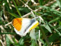 BC (savebutterflies) on Twitter
