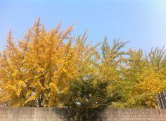 Park Jung Eun @pjekr / 가회동 산책하다 만난 가을.. #가을한장 / 서울 동로 가회 / #골목 #식물 #담벼락 / 2013 11 03 /