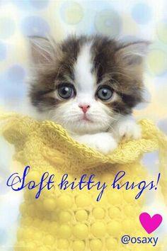 Image result for precious kitten blinking eyes animated gif