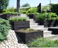 garden Design - Lilly is Love
