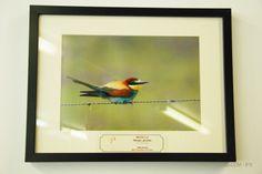 """Exposição """"Aves de Portugal"""", da autoria de José Sousa (Docente da ESTSetúbal/IPS). Patente de 2 a 20 de dez'13, na Mediateca da Escola Superior de Tecnologia de Setúbal."""