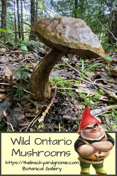 Another strange but beautiful wild mushroom spotted on the Bruce Peninsula! Wild Mushrooms, Stuffed Mushrooms, Different Plants, Fungi, Around The Worlds, Backyard, Gallery, Green, Beautiful