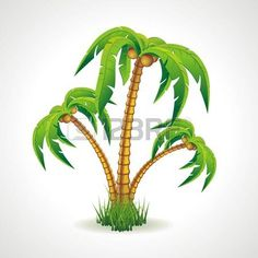 Vector illustration of the palm trees width coconuts  photo