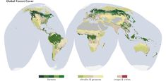Forests cover 30 percent of the Earth's land. (Map by Robert Simmon, based on data from the MODIS Land Cover Group, Boston University.)   >  This is shameful...forests used to cover the whole US, and nearly all of South America...we breathe oxygen...trees make oxygen for us for free...