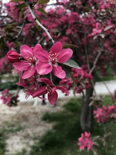 #wildrose #organicrose #vahşigül #organikgül #gül #rose #bahçeçiçeği #flowersgarden #gardenflowers #kesikkavak #haymana #ankara
