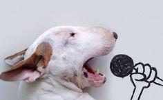 *-* Ilustrátor po rozchode svoj voľný čas a dieru v srdci nezapĺňal dúškami alkoholu, ale rozhodol sa so svojím psíkom vytvárať vtipné ilustrácie. Bulteriér v nich pózuje ako skutočný profesionál.