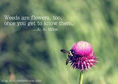 weeds are flowers, too,...
