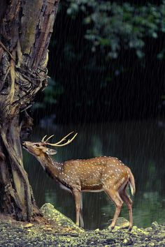 32 Beautiful Photos of Animal Kingdom, Deer in the rain
