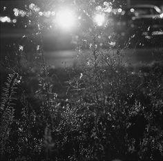 Robert Adams. Longmont, Colorado 1980. From Summer Nights, Walking