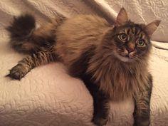 Tina's cat Bastian