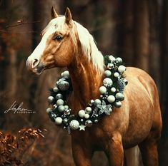 All The Pretty Horses, Beautiful Horses, Animals Beautiful, Cute Animals, Horse Photos, Horse Pictures, Animal Pictures, Palomino, Christmas Horses