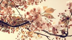 vintage flower hd widescreen wallpapers for laptop