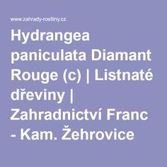 Hydrangea paniculata Diamant Rouge (c) hortenzie latnatá   Listnaté dřeviny   Hydrangea Paniculata, Script, Garden, Diamond, Red, Script Typeface, Garten, Lawn And Garden, Scripts