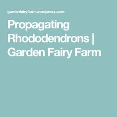Propagating Rhododendrons | Garden Fairy Farm