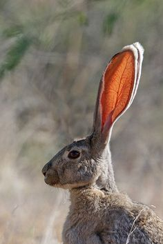 Jack Rabbit | by Alan Gutsell