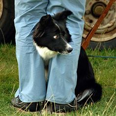 Black and White Rough Coated Working Sheepdog at Evesham Sheepdog Trials - Worcester UK - Dumb Dogs, Lord Is My Shepherd, Country Life, Country Fair, Rough Collie, Herding Dogs, Sheltie, Mans Best Friend, I Love Dogs