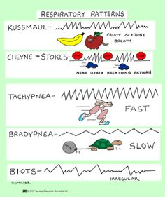 Respiratory Patterns #rcp #rt #respiratory