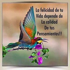 the magic of colors Positive Phrases, Spiritual Messages, Inspirational Phrases, Spanish Quotes, Latin Quotes, Music Quotes, Nature Animals, Famous Quotes, Christian Quotes