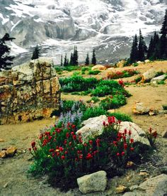 Meadows near Paradise Ranger Station, Mount Rainier National Park, Ashford, Washington, USA