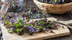 Succulents, Plants, Wellness, Succulent Plants, Plant, Planets