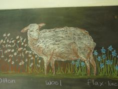 Waldorf ~ 3rd grade ~ Fiber & Clothing ~ Wool ~ chalkboard drawing
