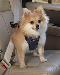 Arnés para perros Vehicle Safety Harness de Solvit | pet n'GO