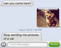 Das not a cat! Distract them with cute pictures: | 23 Foolproof Ways To Get Someone To Stop Talking To You