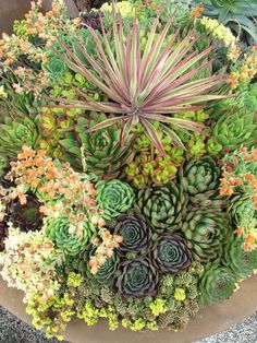 Best Succulent Garden Ideas #homegardentools