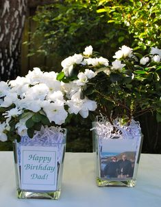 Simple Azalea Centerpieces w fun family photographs for a festive 80th birthday dinner...