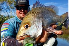 "What did you do over the weekend. Brendan Michael Lowe sent in these pick for us to share. One very nice Mangrove Jack lured out with the help of the 4.8"" Keitech Fat Swing. Great shots!!! Send in your pics to admin@akwamarine.com.au or FB message us. https://www.facebook.com/AkwaMarineQLD/photos/pcb.689252554555125/689252511221796/?type=3&theater"