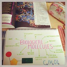 #revision #biology