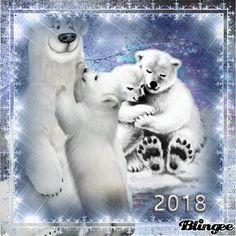 Cute Bears, Beautiful Love, Family Love, Photo Editor, Polar Bear, Friends, Pictures, Animals, Amigos