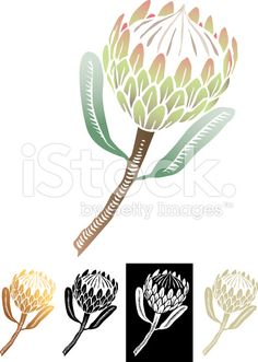 The iconic national flower of South Africa, originating from the Cape. The iconic national flower Protea Art, Protea Flower, Stencil Patterns, Stencil Designs, Outline Designs, Free Vector Art, Lino Art, African Tattoo, Silhouettes