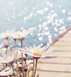 Flowers by the ocean summer bokeh ocean water flowers dock happy sea sunshine