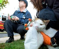Firefighters administer oxygen to some of the many pets that were home during a residential fire. Firefighters found chinchillas, cats, dogs, a large turtle ...