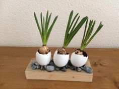 Planter Pots, Deco, Decor, Deko, Decorating, Decoration