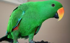 """Green parrot say """"hello"""" - Beautiful Green and rainbow parrot Hello Beautiful, Beautiful Birds, Say Hello, Parrot, Cute Babies, Pets, Green, Pictures, Animals"""